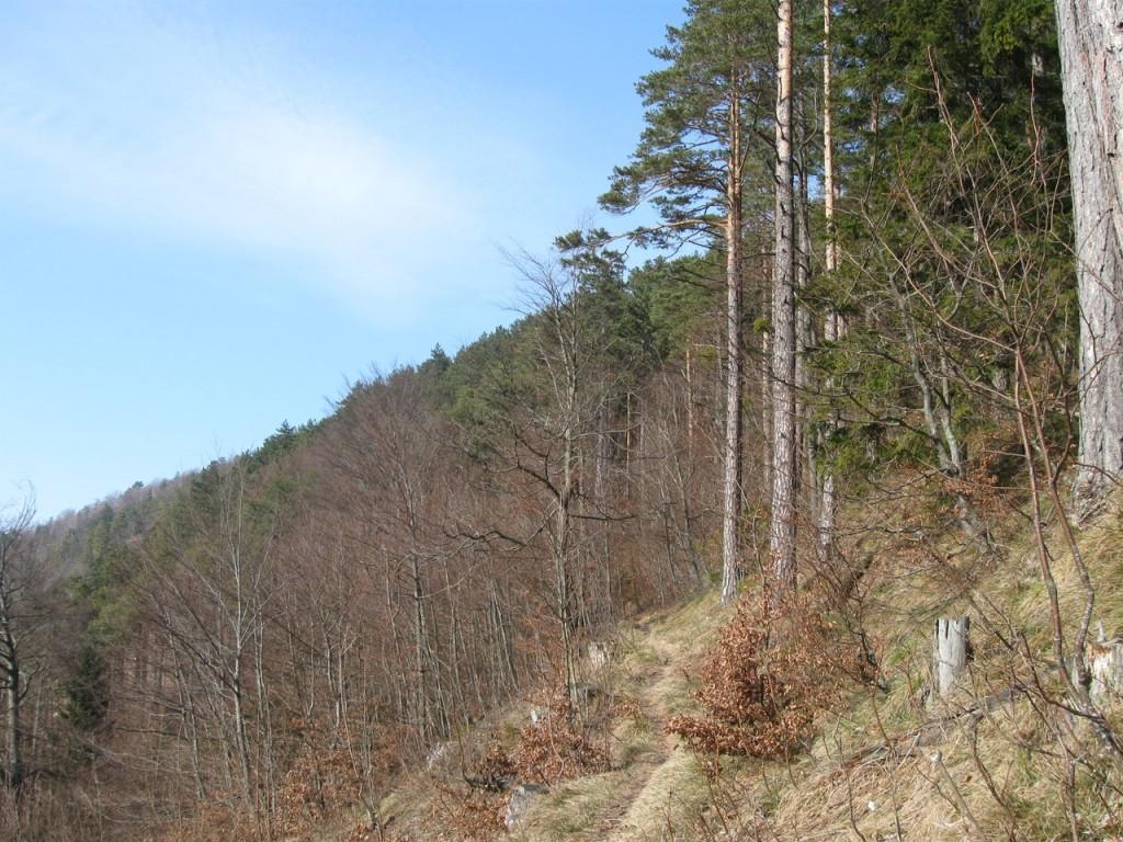 Huetterkogel_081
