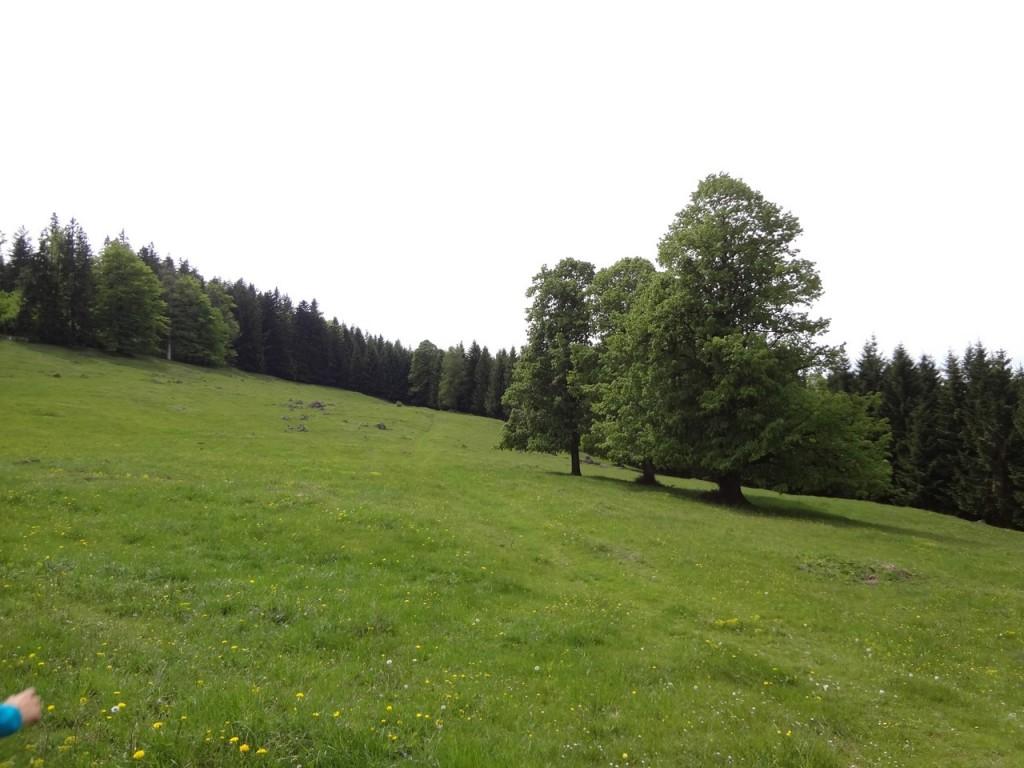 Narzissenwanderung_053 (CC)