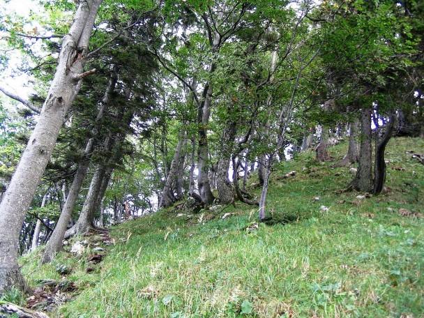 Kuehberg2005_005 (CC)