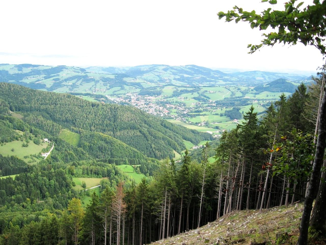 Schwarzenbergi_027 (CC)