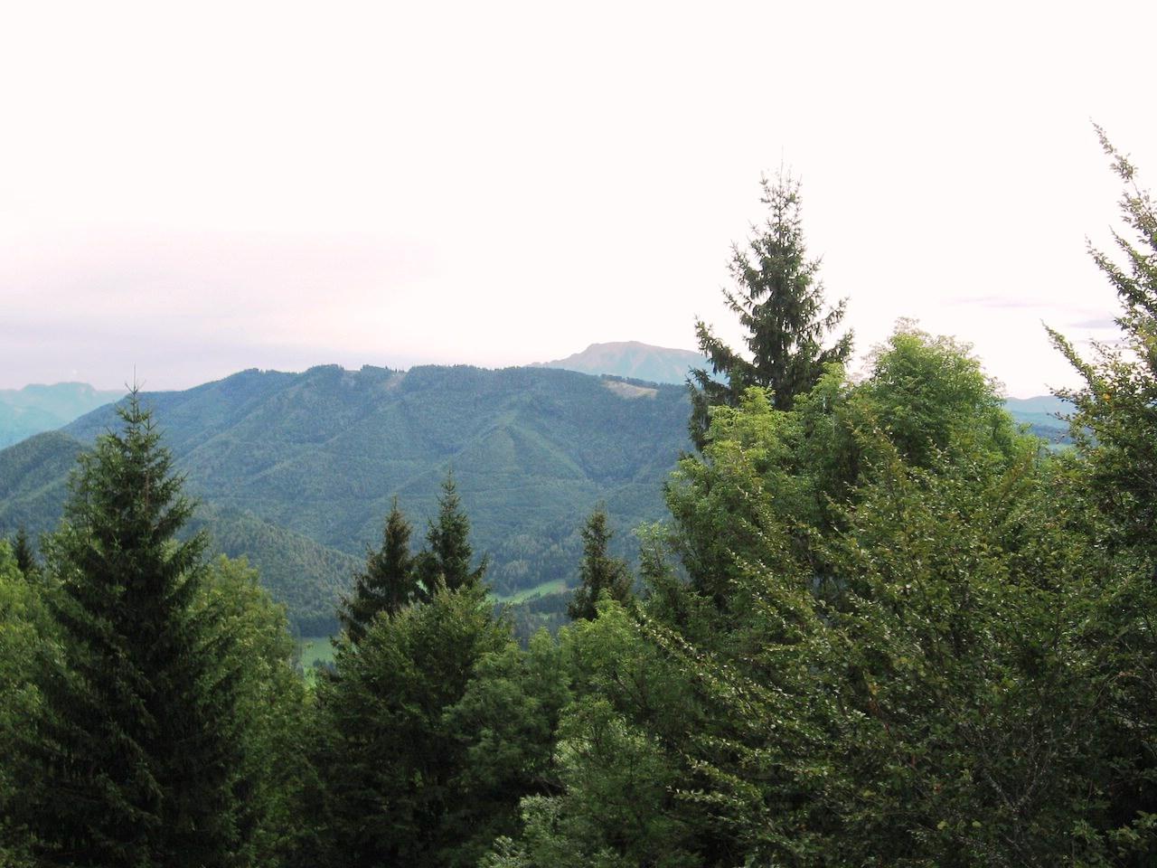 Schwarzenbergi_041 (CC)