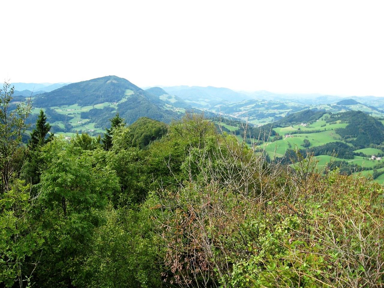 Schwarzenbergi_051 (CC)