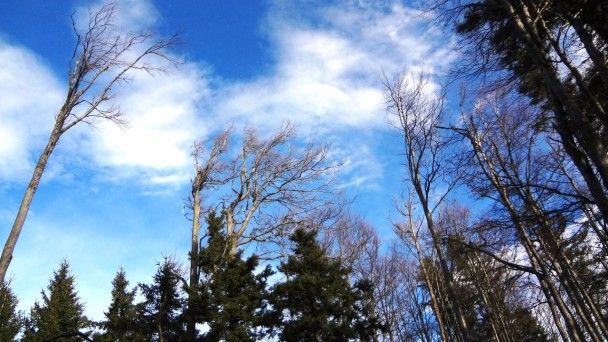 Wetterkogel_046 (CC)