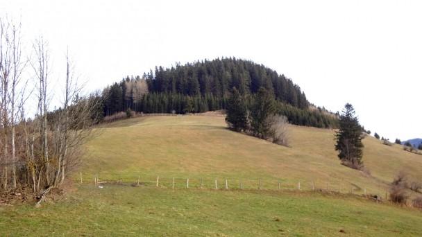Spindeleben_018 (CC)