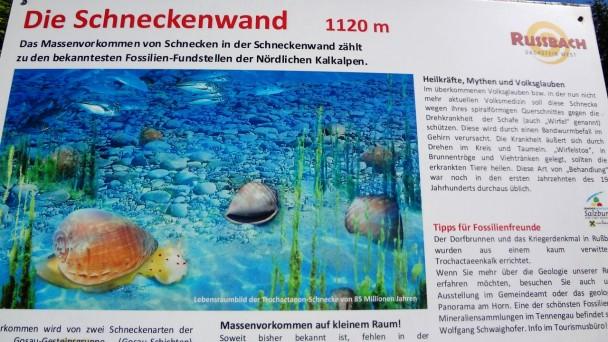 Schneckenwand_041 (CC)