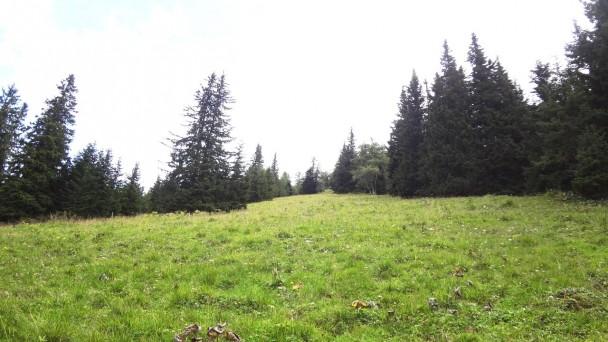 Schwarzenstein024