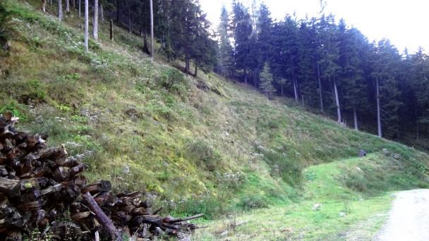 Wurzleiten035