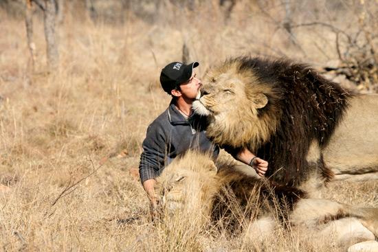 Suedafrika_Kevin_Richardson_Lions
